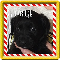 Adopt A Pet :: GEORGE AND MEREDITH - PARSIPPANY, NJ