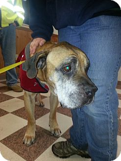 Mastiff Mix Dog for adoption in kennebunkport, Maine - Dempsy, PENDING-in New England