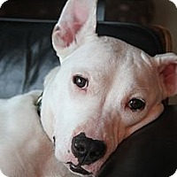 Adopt A Pet :: Nahla - Muskegon, MI