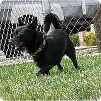 Adopt A Pet :: Kobi - Meridian, ID