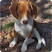 Adopt A Pet :: Hershey - Palm Bay, FL