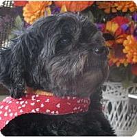 Adopt A Pet :: Wilbur - Covington, KY