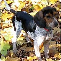Adopt A Pet :: Elena - Novi, MI