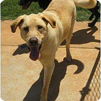 Adopt A Pet :: Dakota - Newcastle, OK