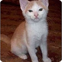 Adopt A Pet :: Johnny--adopted! - New Richmond, OH