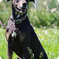 Adopt A Pet :: Bailey - High River, AB