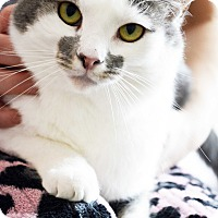 Adopt A Pet :: Jenny - Xenia, OH