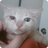 Adopt A Pet :: Sunkist - Lawrenceville, GA