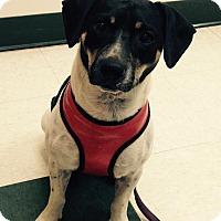 Adopt A Pet :: Lucky Boy 2 - Key Biscayne, FL