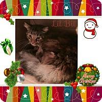 Adopt A Pet :: Lil Bit - Harrisburg, NC