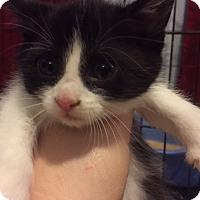 Adopt A Pet :: Jenny - Whitehall, PA
