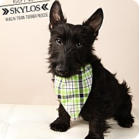 Adopt A Pet :: Skylos-adoption pending - Omaha, NE