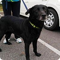 Adopt A Pet :: AJ - Richmond, VA