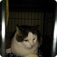 Adopt A Pet :: Dolly - Avon, OH