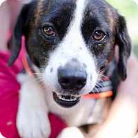 Adopt A Pet :: Loki - Greenwood, SC