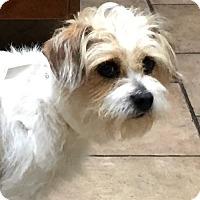 Adopt A Pet :: Sophie - Oswego, IL