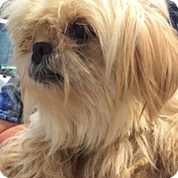 Adopt A Pet :: I'M ADOPTED Blondie Watts - Oswego, IL