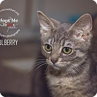 Adopt A Pet :: Mulberry - Cincinnati, OH