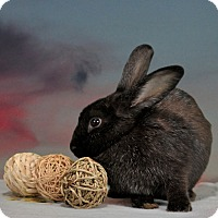 Adopt A Pet :: Valkyrie - Marietta, GA