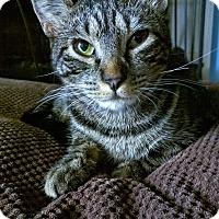 Adopt A Pet :: Jenga - Kirkland, WA