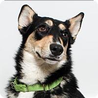 Adopt A Pet :: Lola - San Luis Obispo, CA