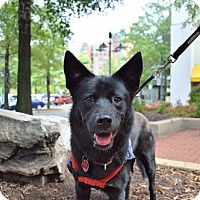 Adopt A Pet :: Joni - Washington, DC