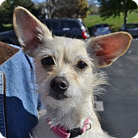Adopt A Pet :: Mindy - Courtesy Listing - Independence, MO