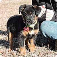 Adopt A Pet :: Otto - Berkeley Heights, NJ