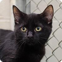 Adopt A Pet :: Robin - Greenwood, SC