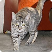 Adopt A Pet :: Gypsum - Ruidoso, NM