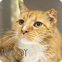 Adopt A Pet :: Baxter Boy - Gulfport, MS