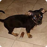 Adopt A Pet :: Dexter - Hilliard, OH