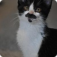 Adopt A Pet :: Mario - Modesto, CA