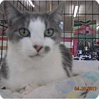 Adopt A Pet :: Butteercup - Riverside, RI