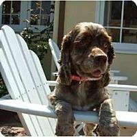 Adopt A Pet :: Abby 2 - San Diego, CA