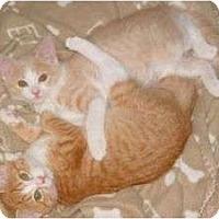 Adopt A Pet :: Sugar n Spice - McDonough, GA