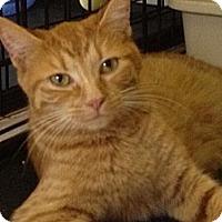 Adopt A Pet :: Selena - Monroe, GA