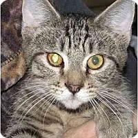 Adopt A Pet :: Petey - Kirkwood, DE