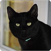 Adopt A Pet :: Porter - Lunenburg, MA
