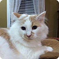 Adopt A Pet :: Mikey - Fredericksburg, VA