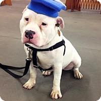 Adopt A Pet :: Phoebe - Medina, OH