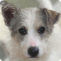 Adopt A Pet :: Mason-MEET HIM - Norwalk, CT