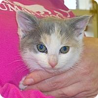 Adopt A Pet :: Thumbelina - Island Park, NY