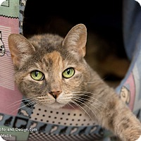 Adopt A Pet :: Friskie - Fountain Hills, AZ