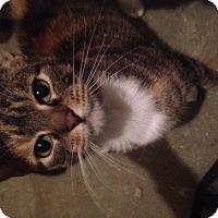 Adopt A Pet :: Willow - East McKeesport, PA