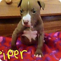 Adopt A Pet :: Piper - Broken Arrow, OK
