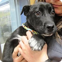 Adopt A Pet :: Pippi - Westport, CT