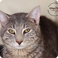 Adopt A Pet :: Grayson - Lyons, NY