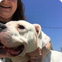 Adopt A Pet :: Lucky - Lewisburg, TN