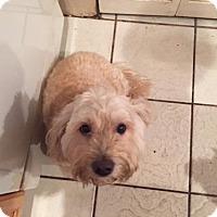Adopt A Pet :: Pumpkin - Naples, FL
